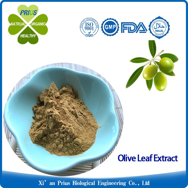 Olive Leaf Extract Antiviral Oleuropein Supplement Health benefits Antiviral Olea Europaea Extract.jpg