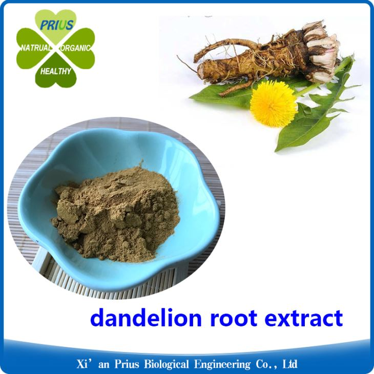 Dandelion Root Extract Powder