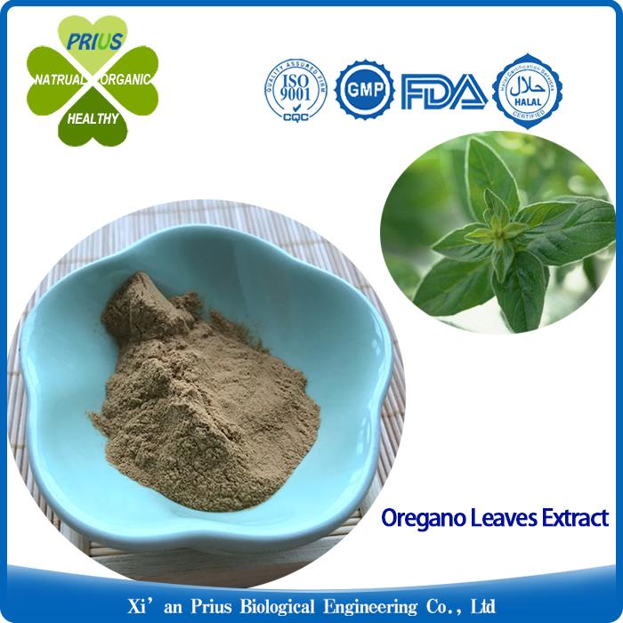 Oregano Leaves Extract Natural Oregano Powder for Cough Oregano Herb Leaf Extract