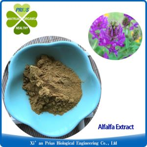 Organic Alfalfa Medicago Sativa Plant Extract Powder for Liver Care