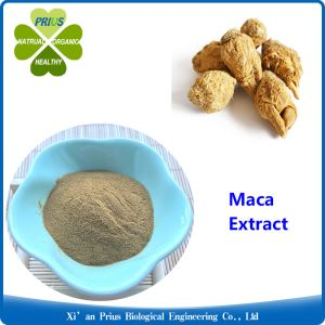 Maca Root Extract Maca Health Benefits High Standard Organic Maca Root Powder Men Health