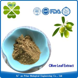 Olive Leaf Extract Antiviral Oleuropein Supplement Health Benefits Antiviral Olea Europaea Extract