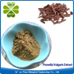 Prunella Vulgaris Extract 10:1 Ratio Extract Traditional Herbal Medicine Common Selfheal Fruit-spike Extract