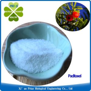 Taxus Chinensis Extract Paclitaxel Powder