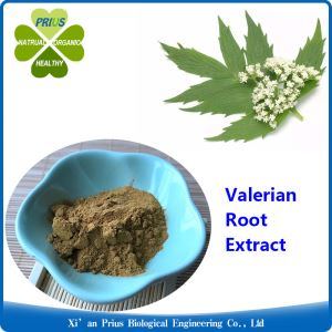 Valerian Root Extract Valerian Root for Anxiety Valerian Anxiety Valeric Acid Valerian Root for Sleep