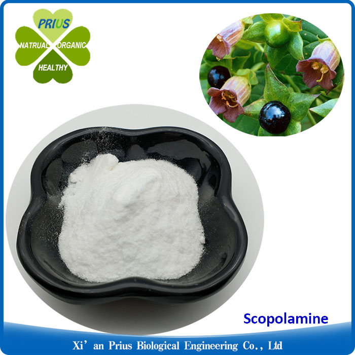 Belladonna Extract Powder Scopolamine